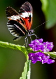 Butterfly World  ,,,,,,,    Coconut Creek  Florida