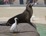 Sea World_008.jpg