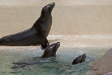 Sea World_011.jpg