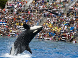 Sea World_023.jpg