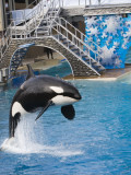 Sea World_038.jpg