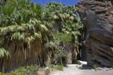 Palm Springs California (Indian Canyon)
