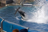 Sea World_075.jpg