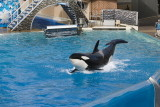 Sea World_093.jpg