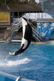 Sea World_128.jpg