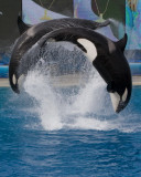 Sea World_149.jpg