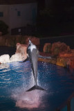 Sea World_198.jpg