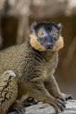 Madagascar_04.jpg