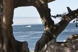 Pacific Grove_11.jpg