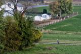 Lancaster county_002.jpg