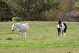 Lancaster county_049.jpg