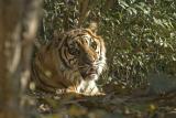 at-zoo_02.jpg