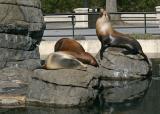 PP zoo 2-2-06_06.JPG