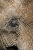 Elephants eye_193.jpg