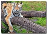 hanging out at animal kingdom