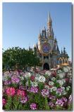 Magic Kingdom flower garden