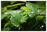Leftover raindrops