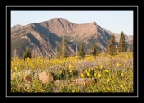 Early morning on Lulu Pass Road