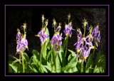 Flowers in Darwin Canyon