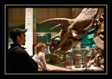 Up close and personal at the Museum of Natural History