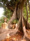 181 botanical gardens 2.JPG