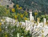 421 Delphi.jpg