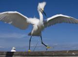 February 11, 2009  - Dancing bird