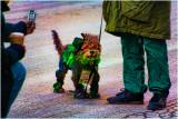 Le chien Irlandais
