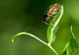 Close Look At Bug