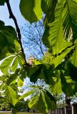 Blue Sky Through The Leaves