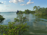 High Tide In Mangrove Forest
