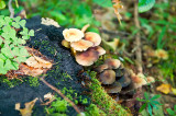 Fungi  Of The Woods