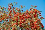 Abundance Of Red