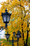 Autumn Lanterns