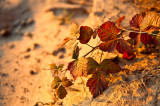 Fall Colors On The Sand