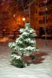 Night Snowing