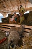 Nativity Scene At Plac Krasinskich