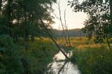 Creek At The Flowering Meadow