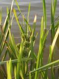 Reed Fruit