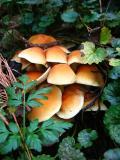 Mushrooms Tiny Ones
