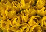 Plenty Of Yellow