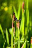 New Iris Flowers