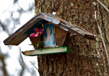 Tiny Tree Shrine
