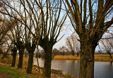 Willows Of Mazowsze