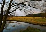 Meadows Near Ossow