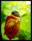 'The Caterpillar'
