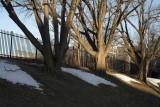 Spring @f4 70mm 5D