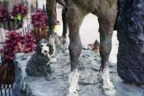 Dogs @f5.6 Reala