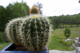 Cacti @f8 D700