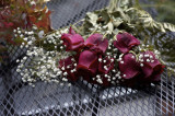 Roses @f2.8 NEX5